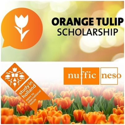 orange tulip becas